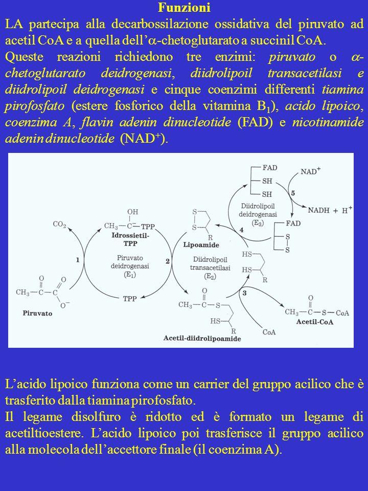 Funzioni LA partecipa alla decarbossilazione ossidativa del piruvato ad acetil CoA e a quella dell -chetoglutarato a succinil CoA. Queste reazioni ric