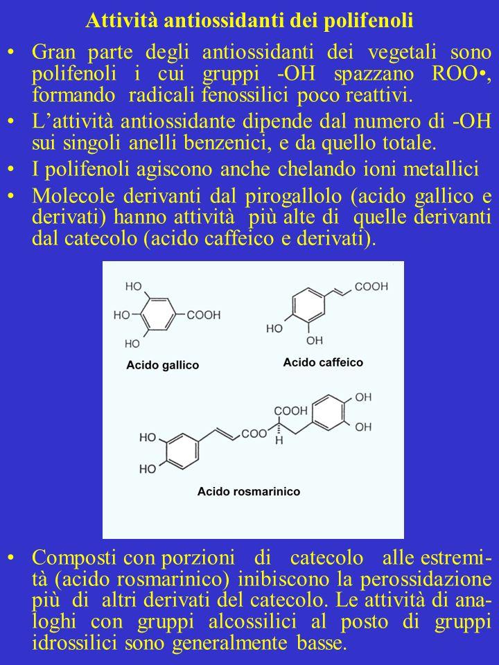 Attività antiossidanti dei polifenoli Gran parte degli antiossidanti dei vegetali sono polifenoli i cui gruppi -OH spazzano ROO, formando radicali fen