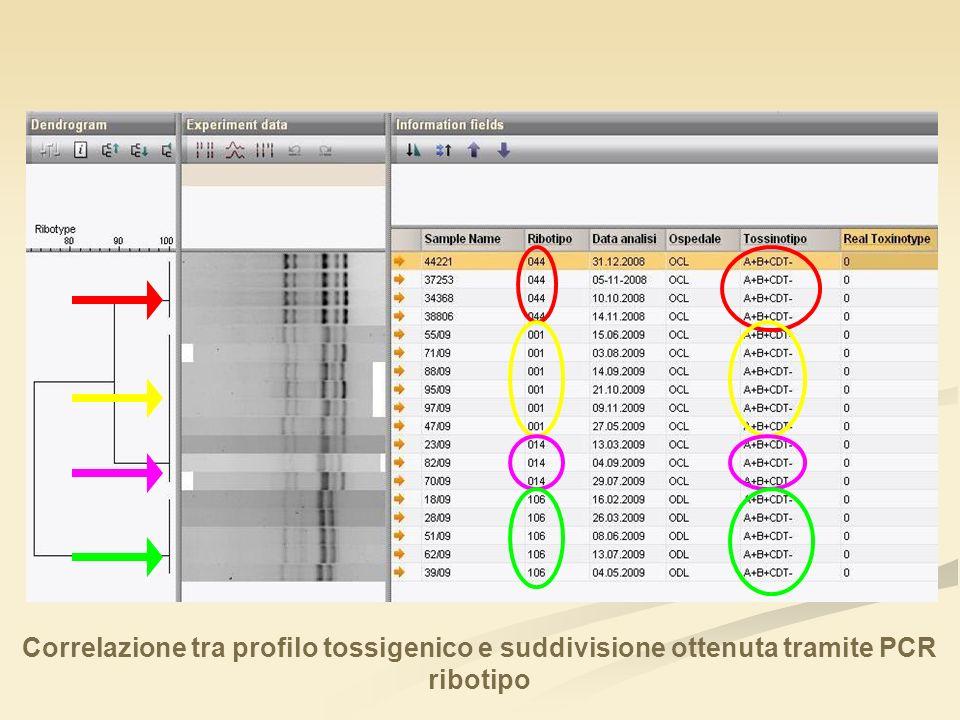 Correlazione tra profilo tossigenico e suddivisione ottenuta tramite PCR ribotipo