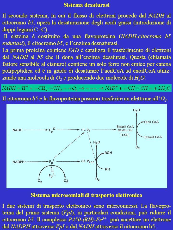 Sistema desaturasi Il secondo sistema, in cui il flusso di elettroni procede dal NADH al citocromo b5, opera la desaturazione degli acidi grassi (intr