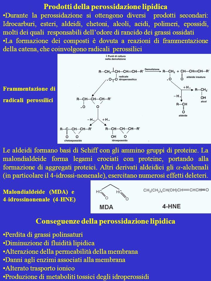 Prodotti della perossidazione lipidica Durante la perossidazione si ottengono diversi prodotti secondari: Idrocarburi, esteri, aldeidi, chetoni, alcol