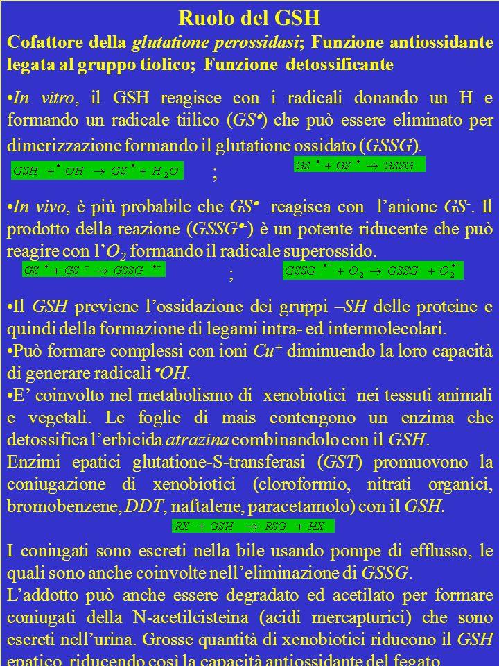 Ruolo del GSH Cofattore della glutatione perossidasi; Funzione antiossidante legata al gruppo tiolico; Funzione detossificante In vitro, il GSH reagis