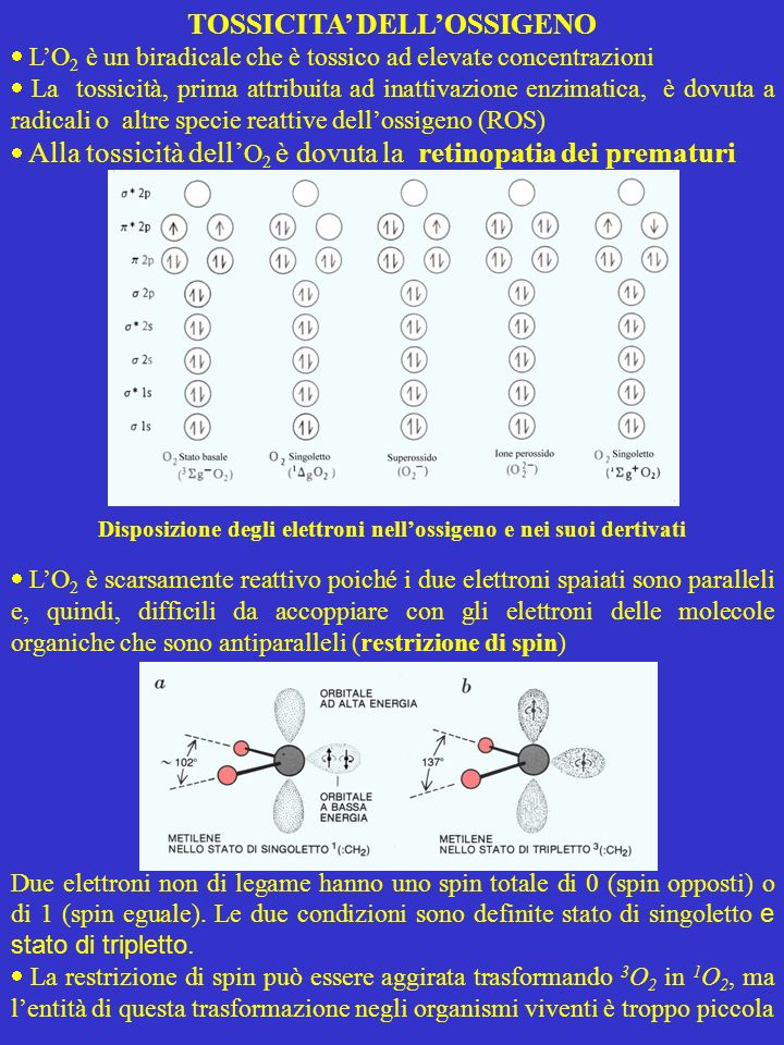 TOSSICITA DELLOSSIGENO LO 2 è un biradicale che è tossico ad elevate concentrazioni La tossicità, prima attribuita ad inattivazione enzimatica, è dovu