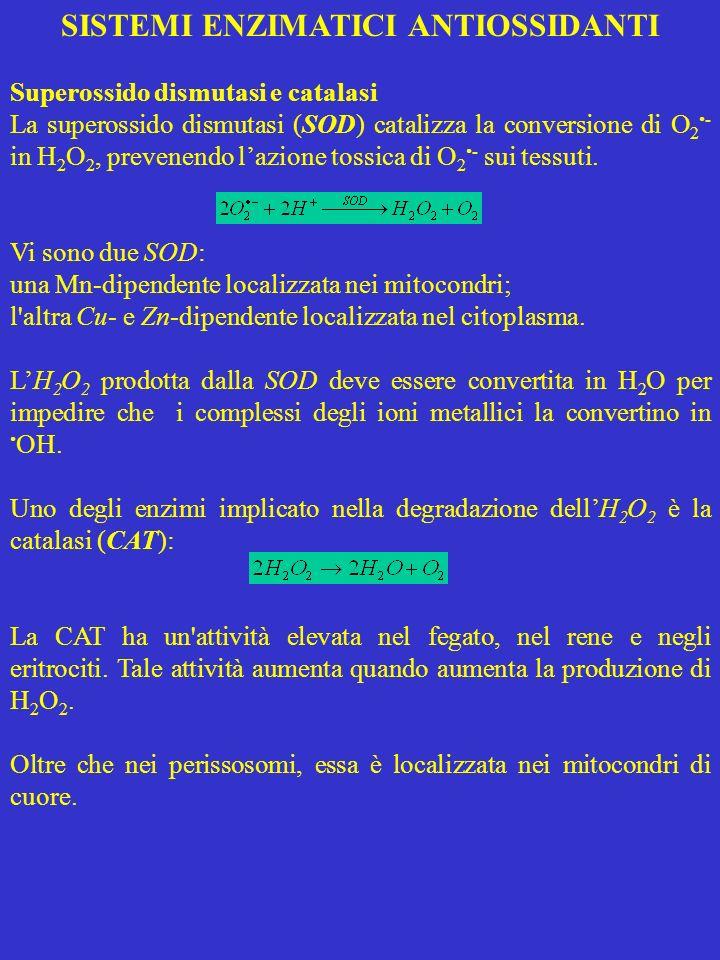 SISTEMI ENZIMATICI ANTIOSSIDANTI Superossido dismutasi e catalasi La superossido dismutasi (SOD) catalizza la conversione di O 2 - in H 2 O 2, prevene