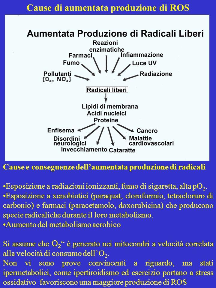 Cause di aumentata produzione di ROS Cause e conseguenze dellaumentata produzione di radicali Esposizione a radiazioni ionizzanti, fumo di sigaretta,