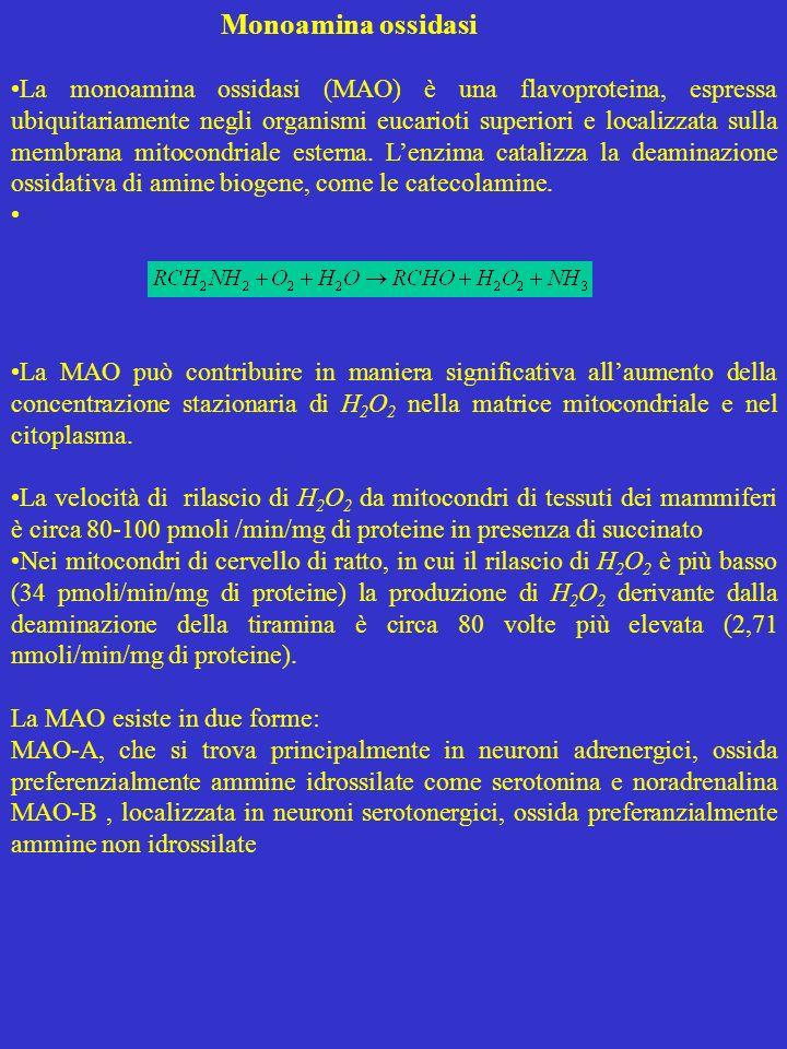 Monoamina ossidasi La monoamina ossidasi (MAO) è una flavoproteina, espressa ubiquitariamente negli organismi eucarioti superiori e localizzata sulla