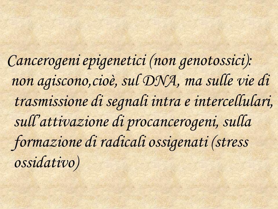 Cancerogeni epigenetici (non genotossici): non agiscono,cioè, sul DNA, ma sulle vie di trasmissione di segnali intra e intercellulari, sullattivazione di procancerogeni, sulla formazione di radicali ossigenati (stress ossidativo)