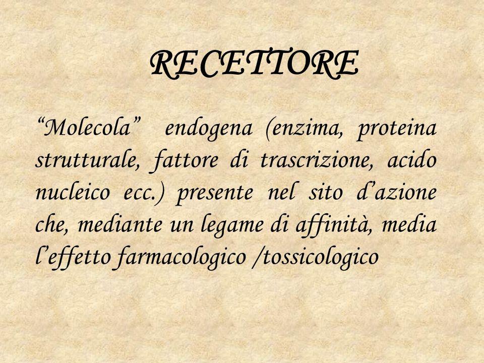 RECETTORE Molecola endogena (enzima, proteina strutturale, fattore di trascrizione, acido nucleico ecc.) presente nel sito dazione che, mediante un legame di affinità, media leffetto farmacologico /tossicologico