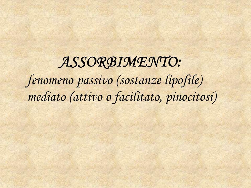 ASSORBIMENTO: fenomeno passivo (sostanze lipofile) mediato (attivo o facilitato, pinocitosi)