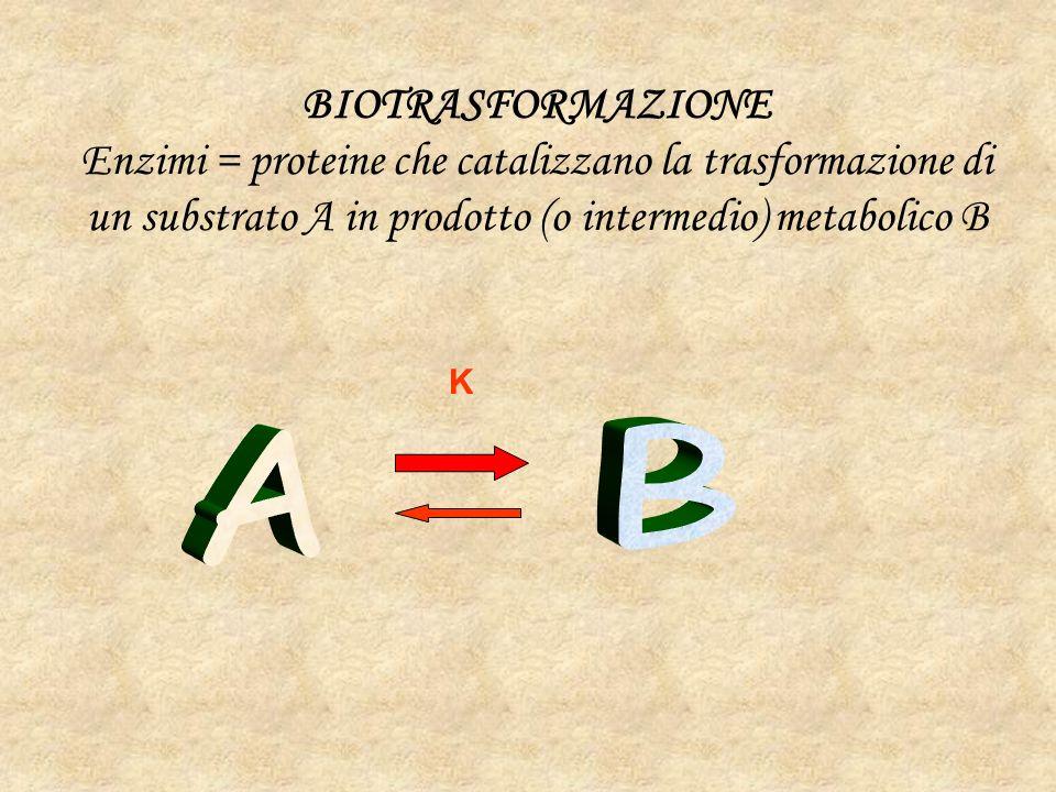 BIOTRASFORMAZIONE Enzimi = proteine che catalizzano la trasformazione di un substrato A in prodotto (o intermedio) metabolico B K