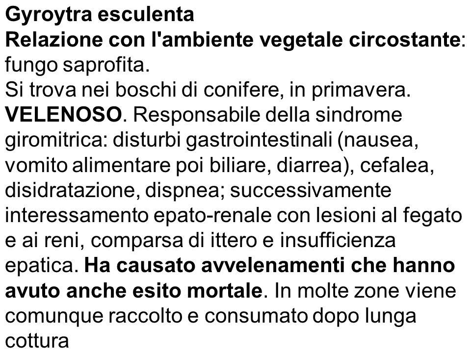 Relazione con l ambiente vegetale circostante: fungo saprofita.