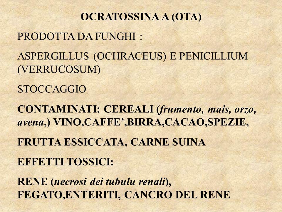 OCRATOSSINA A (OTA) PRODOTTA DA FUNGHI : ASPERGILLUS (OCHRACEUS) E PENICILLIUM (VERRUCOSUM) STOCCAGGIO CONTAMINATI: CEREALI (frumento, mais, orzo, avena,) VINO,CAFFE,BIRRA,CACAO,SPEZIE, FRUTTA ESSICCATA, CARNE SUINA EFFETTI TOSSICI: RENE (necrosi dei tubulu renali), FEGATO,ENTERITI, CANCRO DEL RENE