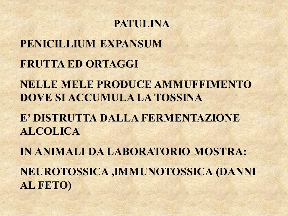 PATULINA PENICILLIUM EXPANSUM FRUTTA ED ORTAGGI NELLE MELE PRODUCE AMMUFFIMENTO DOVE SI ACCUMULA LA TOSSINA E DISTRUTTA DALLA FERMENTAZIONE ALCOLICA IN ANIMALI DA LABORATORIO MOSTRA: NEUROTOSSICA,IMMUNOTOSSICA (DANNI AL FETO)