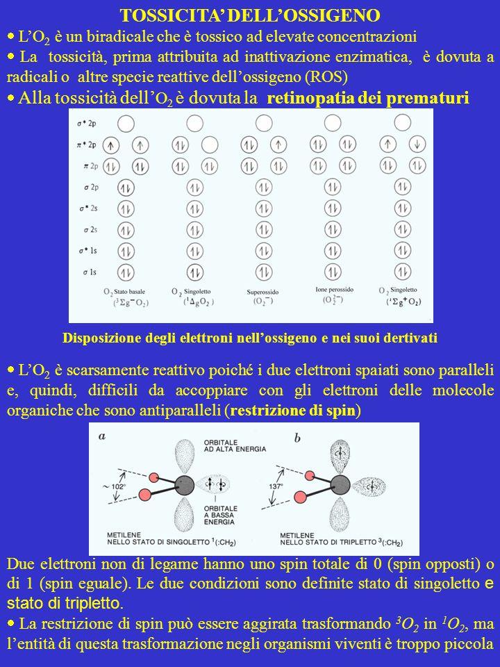 Reattività dellossigeno La restrizione di spin è normalmente aggirata mediante lausilio di sostanze (metalli di transizione o sostanze che li contengono) in grado di trasferire allossigeno elettroni col giusto spin.