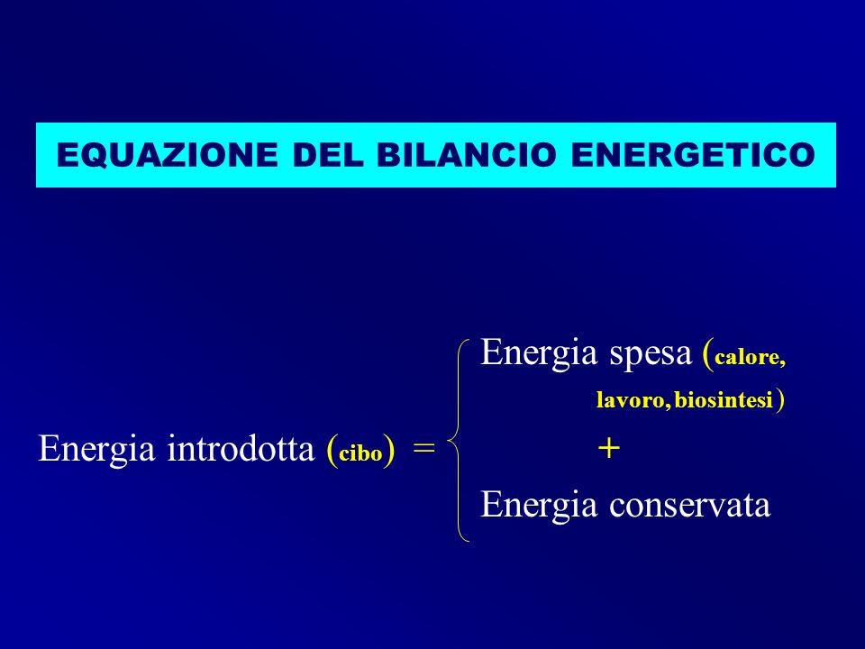 EQUAZIONE DEL BILANCIO ENERGETICO Energia spesa ( calore, lavoro, biosintesi ) Energia introdotta ( cibo ) = + Energia conservata