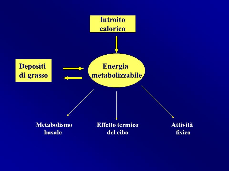 Metabolismo Effetto termico Attività basale del cibo fisica Introito calorico Energia metabolizzabile Depositi di grasso
