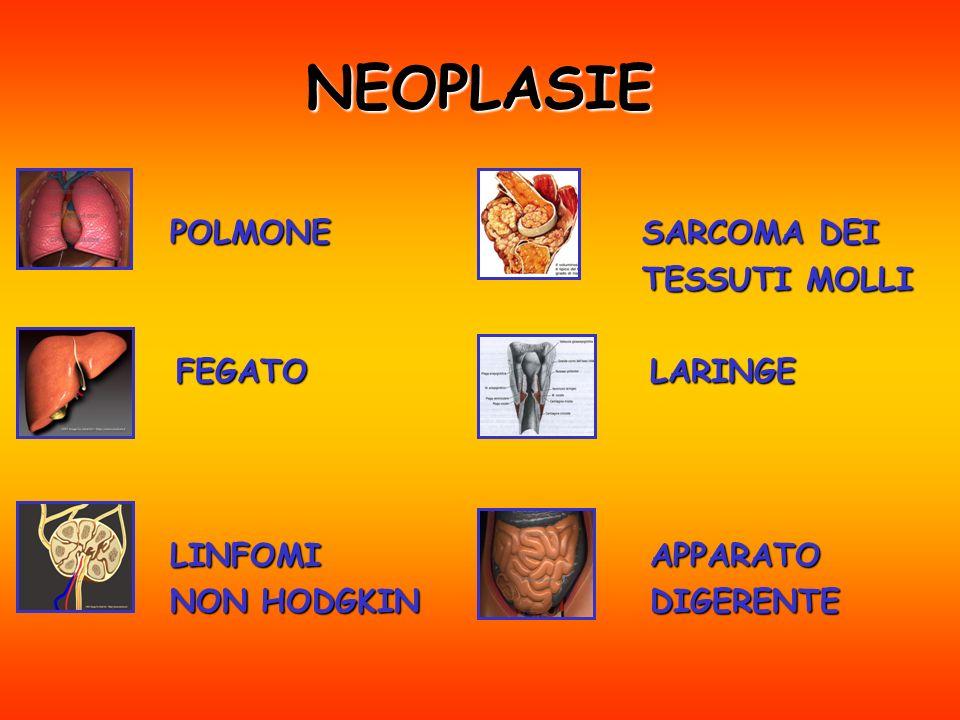 NEOPLASIE POLMONE FEGATO FEGATO LINFOMI NON HODGKIN SARCOMA DEI TESSUTI MOLLI LARINGE APPARATO APPARATO DIGERENTE
