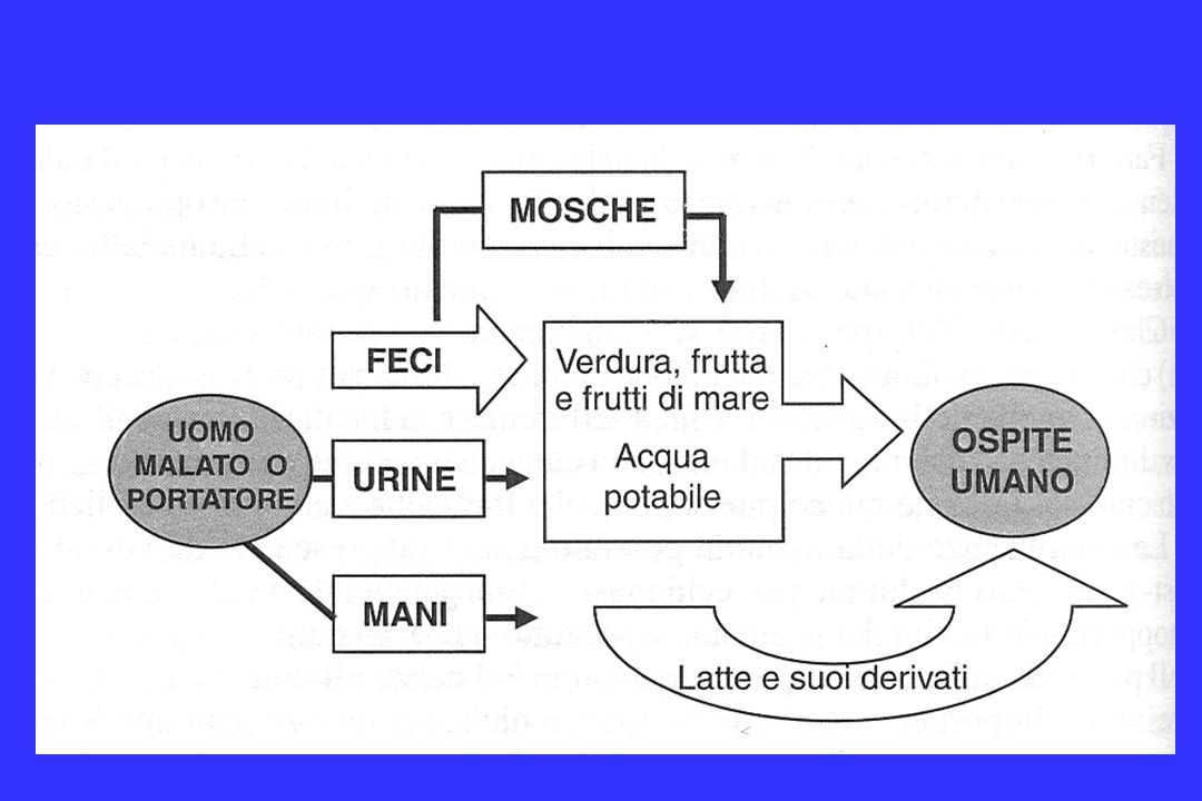 La diminuzione e laumento delle infezioni da Salmonella negli U.S.A., 1920-2001 CDC, National Notifiable Diseases Surveillance data Sanitary revolution Disinfection of water Sewage treatment Pasteurization of milk Shellfish sanitation