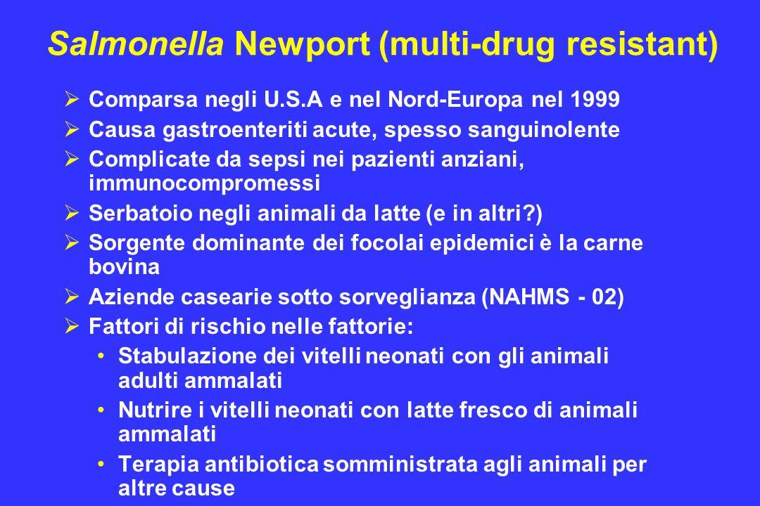Salmonella Newport (multi-drug resistant) Comparsa negli U.S.A e nel Nord-Europa nel 1999 Causa gastroenteriti acute, spesso sanguinolente Complicate