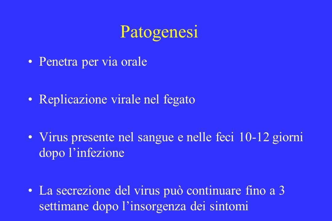 Patogenesi Penetra per via orale Replicazione virale nel fegato Virus presente nel sangue e nelle feci 10-12 giorni dopo linfezione La secrezione del