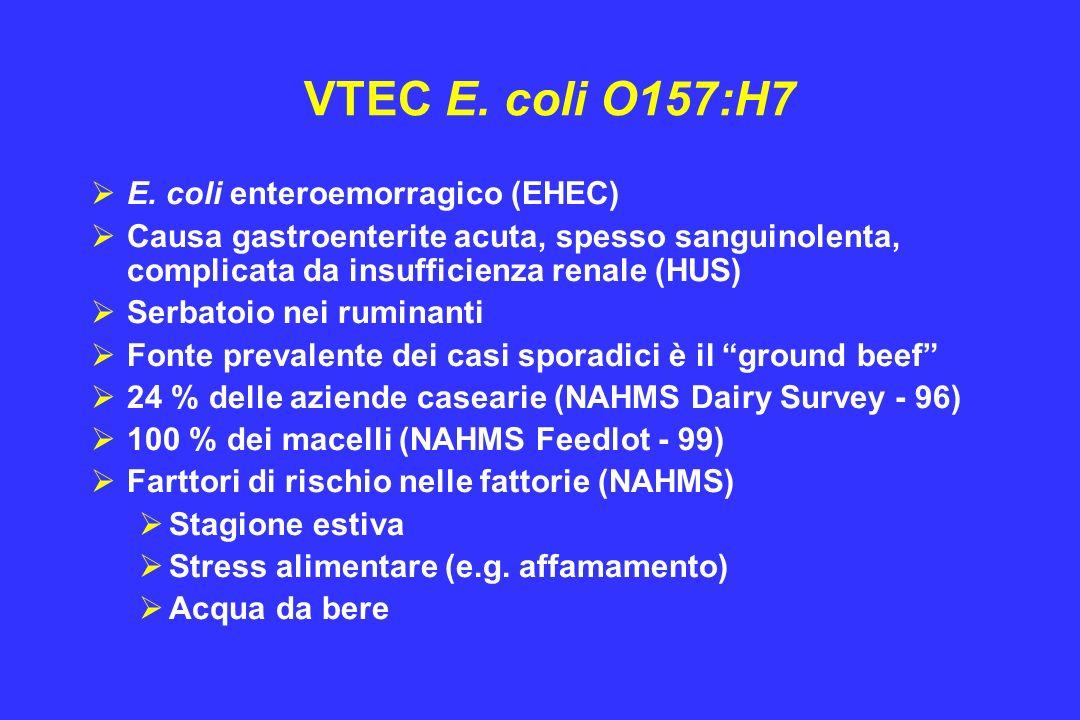 VTEC E. coli O157:H7 E. coli enteroemorragico (EHEC) Causa gastroenterite acuta, spesso sanguinolenta, complicata da insufficienza renale (HUS) Serbat