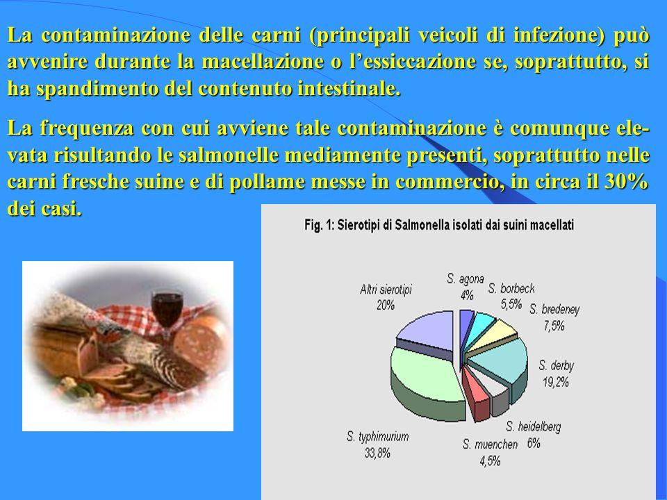 La contaminazione delle carni (principali veicoli di infezione) può avvenire durante la macellazione o lessiccazione se, soprattutto, si ha spandiment