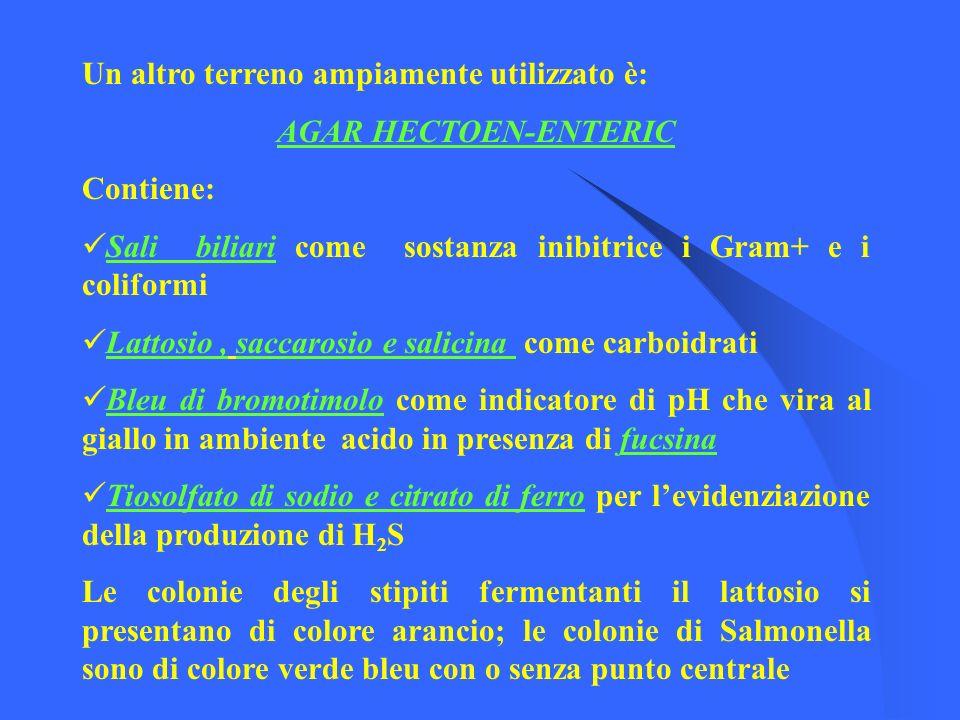 Un altro terreno ampiamente utilizzato è: AGAR HECTOEN-ENTERIC Contiene: Sali biliari come sostanza inibitrice i Gram+ e i coliformi Lattosio, saccaro