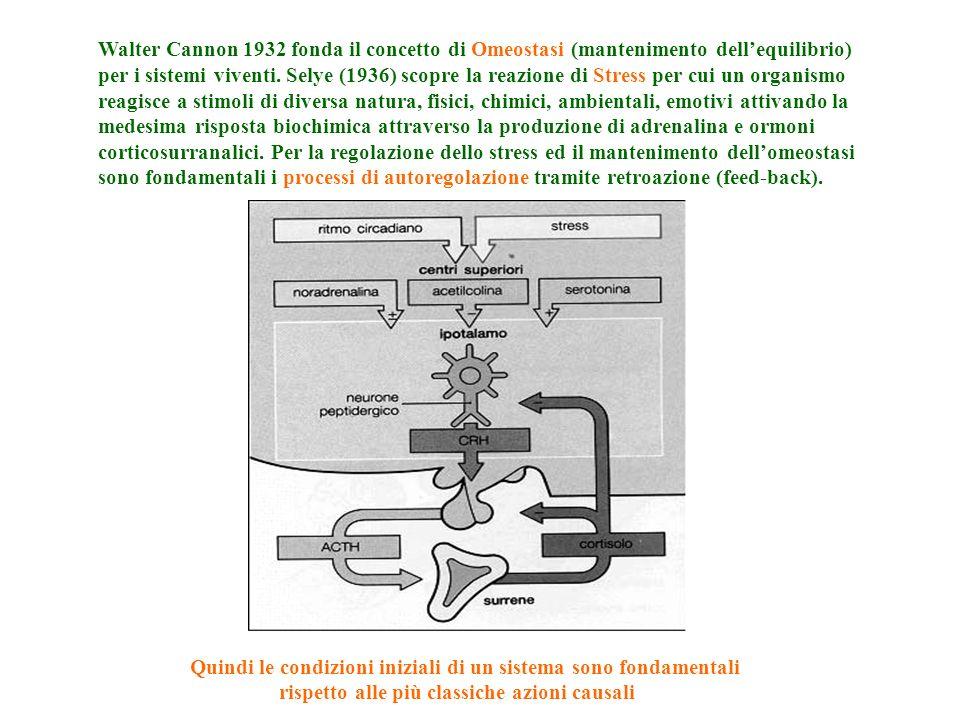 Causalità lineare (determinismo) Causalità circolare (Teorie sistemiche) A B C D Stimolo tessuto alterazione risposta A B D C QUINDI NEGLI ORGANISMI VIVENTI NON HA SENSO ATTRIBUIRE UN FENOMENO AD UNUNICA CAUSA O AD UNA SERIE LINEARE DI EVENTI