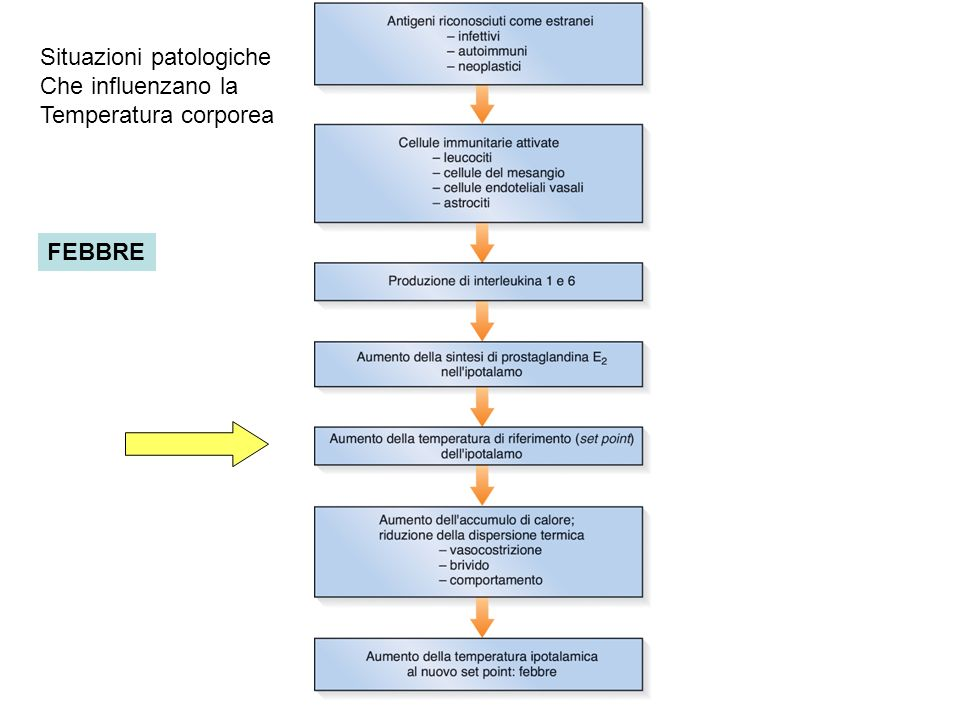 FEBBRE Situazioni patologiche Che influenzano la Temperatura corporea