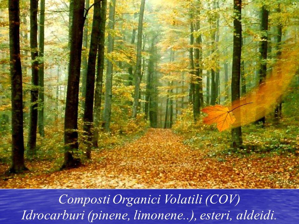Composti Organici Volatili (COV) Idrocarburi (pinene, limonene..), esteri, aldeidi.