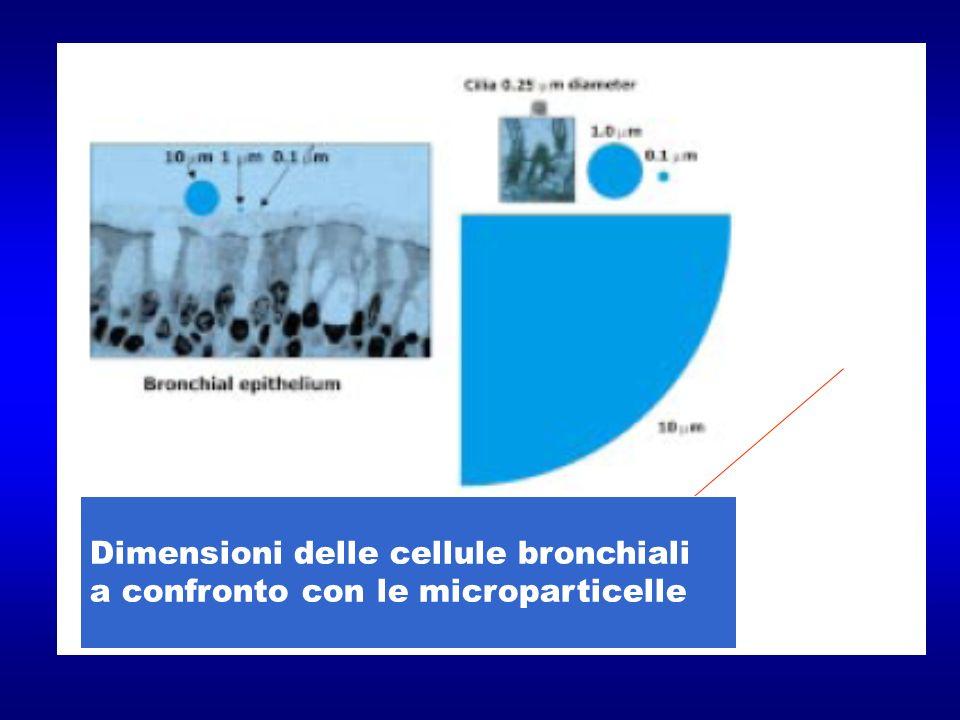 Dimensioni delle cellule bronchiali a confronto con le microparticelle