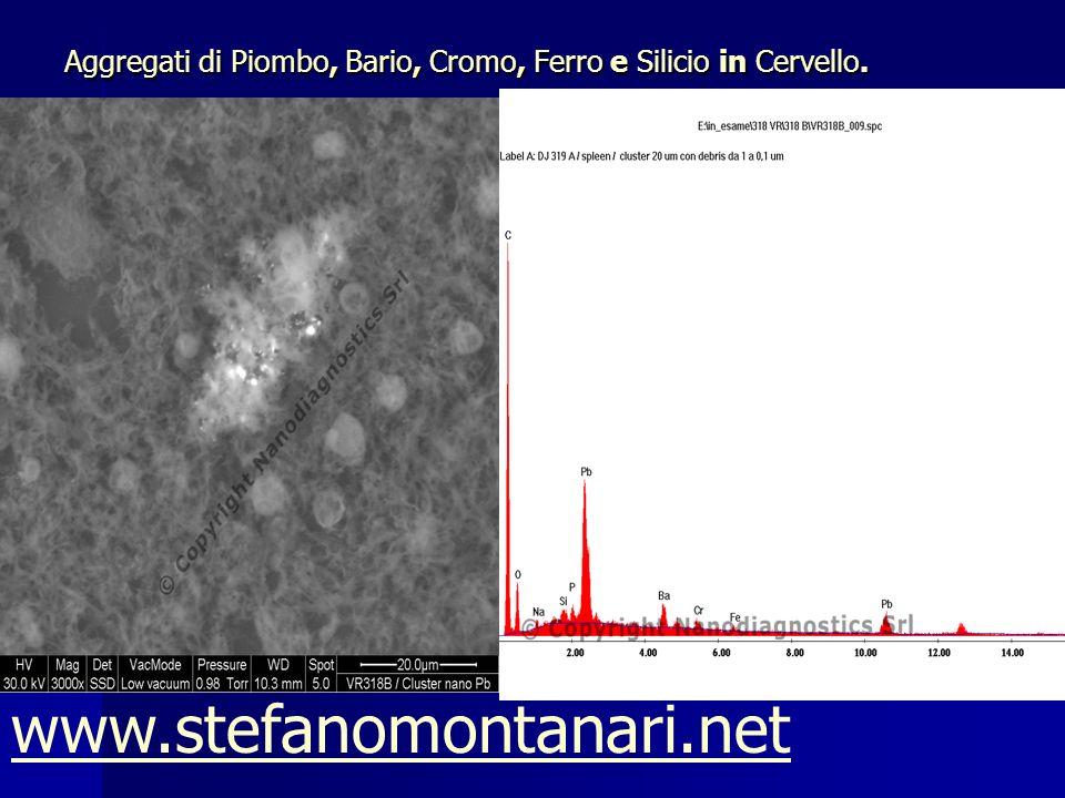 Aggregati di Piombo, Bario, Cromo, Ferro e Silicio in Cervello. www.stefanomontanari.net