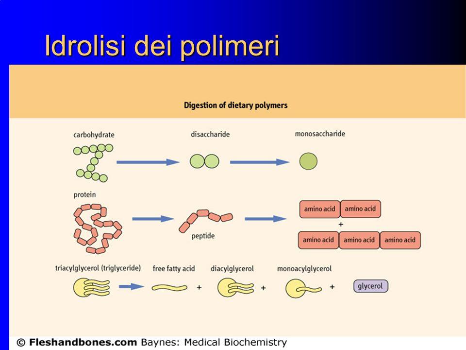 2 Idrolisi dei polimeri