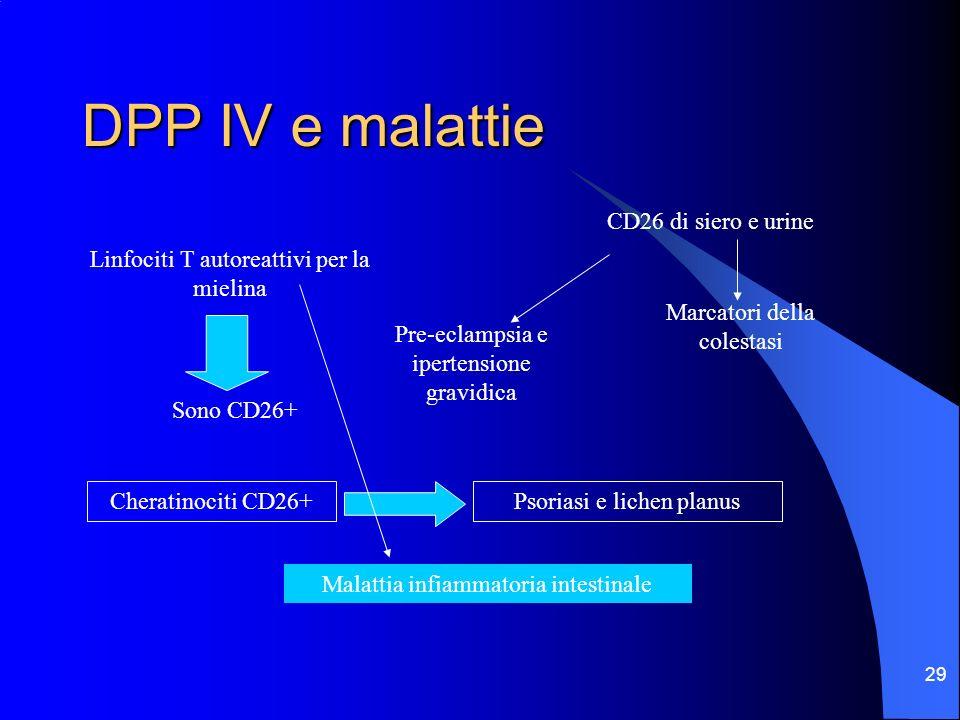29 DPP IV e malattie Linfociti T autoreattivi per la mielina Sono CD26+ CD26 di siero e urine Marcatori della colestasi Pre-eclampsia e ipertensione g