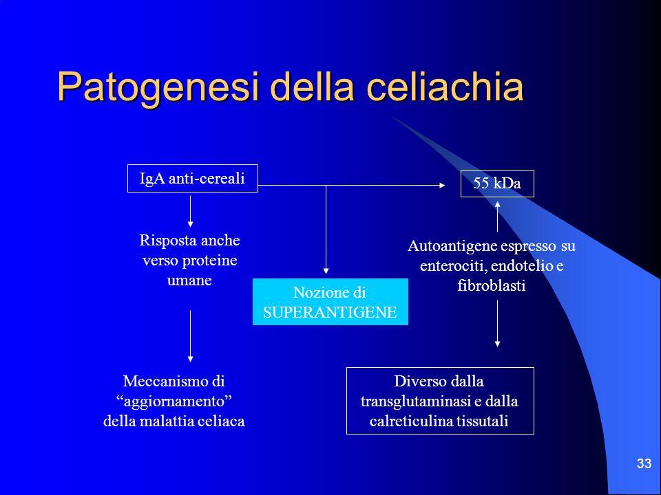 33 Patogenesi della celiachia IgA anti-cereali Risposta anche verso proteine umane Autoantigene espresso su enterociti, endotelio e fibroblasti 55 kDa