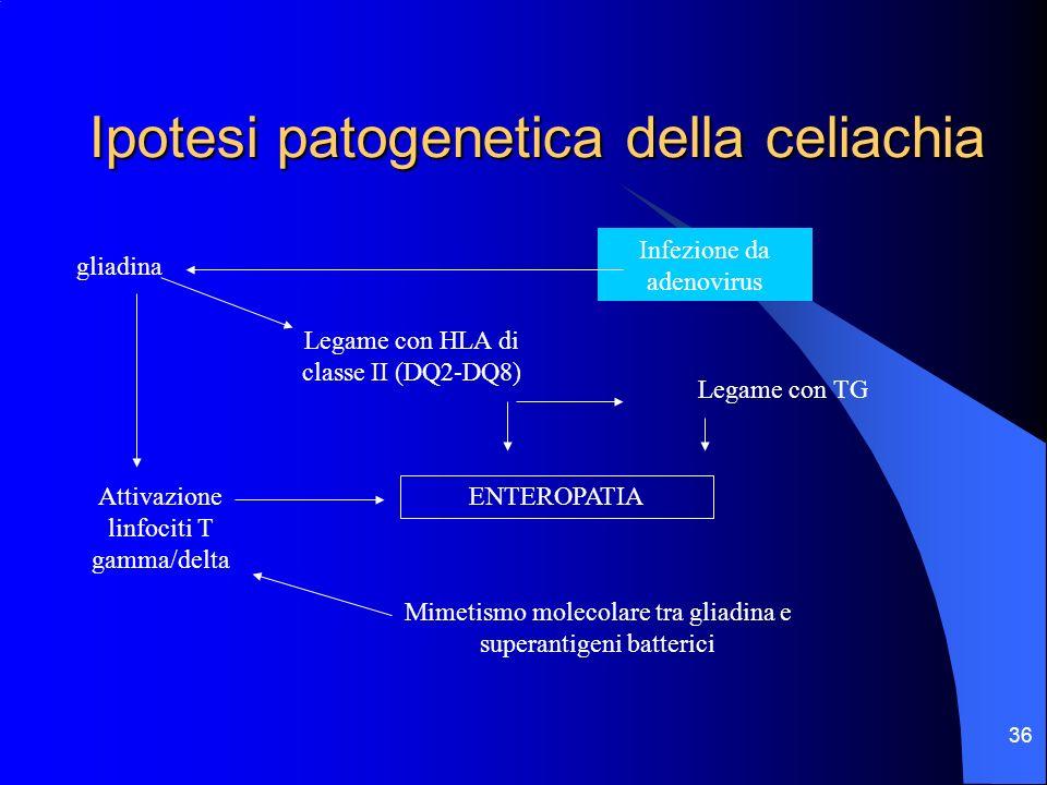 36 Ipotesi patogenetica della celiachia gliadina Legame con HLA di classe II (DQ2-DQ8) Attivazione linfociti T gamma/delta Mimetismo molecolare tra gl