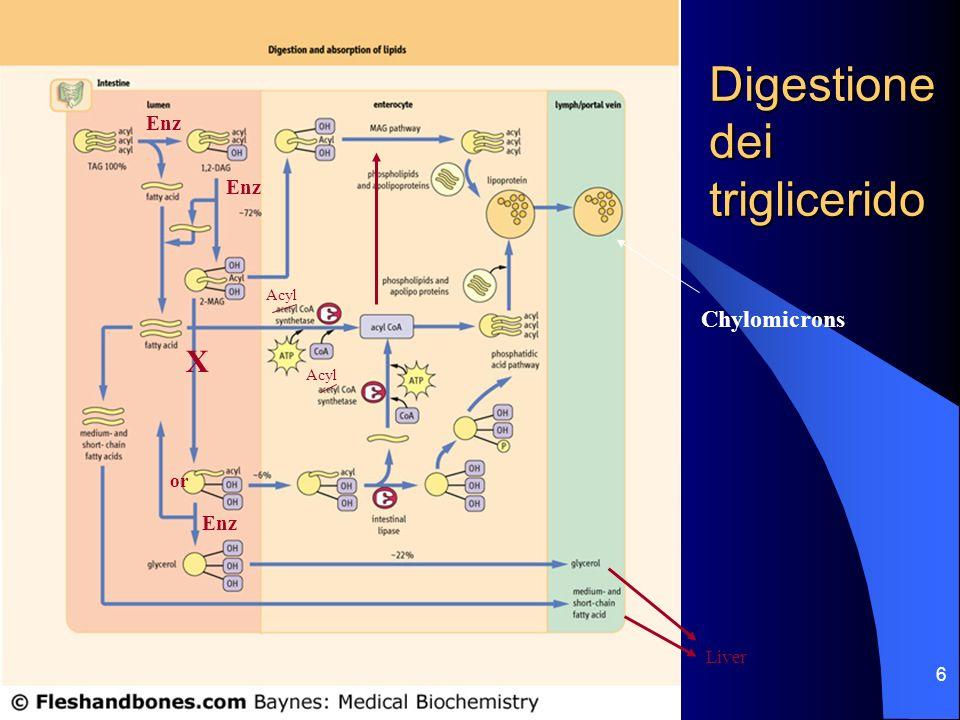 6 Acyl Liver X or Enz Digestione dei triglicerido Chylomicrons