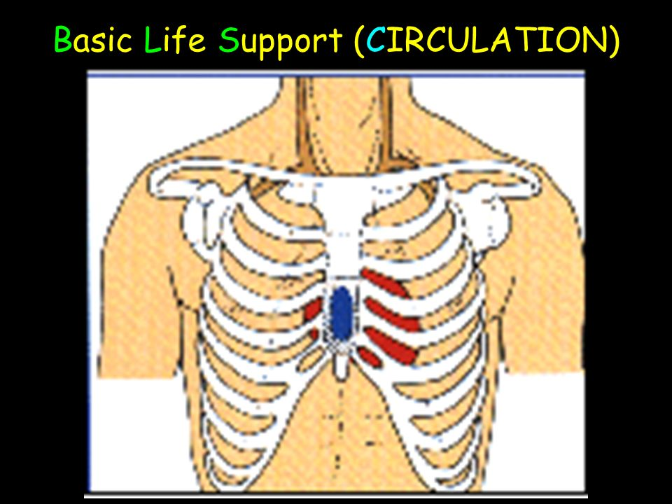 Basic Life Support (CIRCULATION)