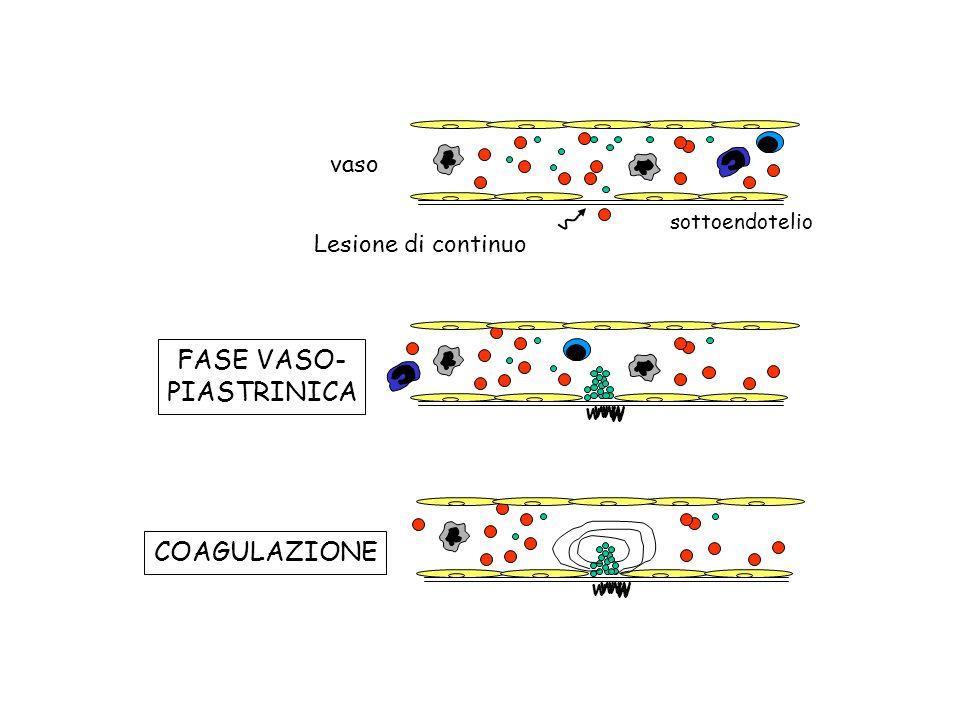 vaso Lesione di continuo sottoendotelio w ww w w w ww w w FASE VASO- PIASTRINICA COAGULAZIONE