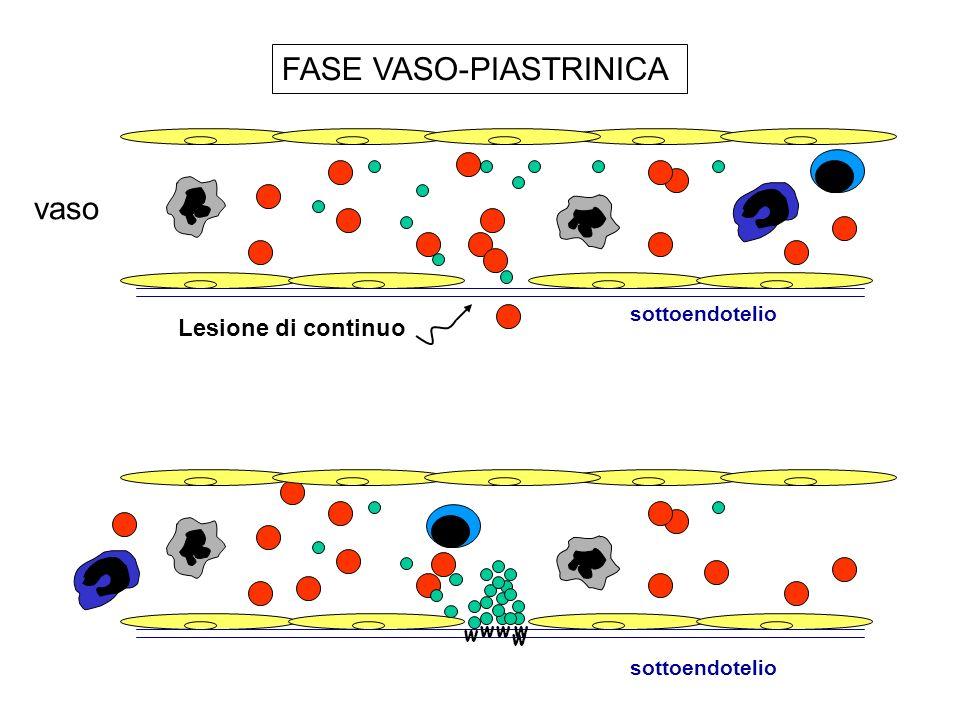vaso Lesione di continuo sottoendotelio w ww w w FASE VASO-PIASTRINICA sottoendotelio