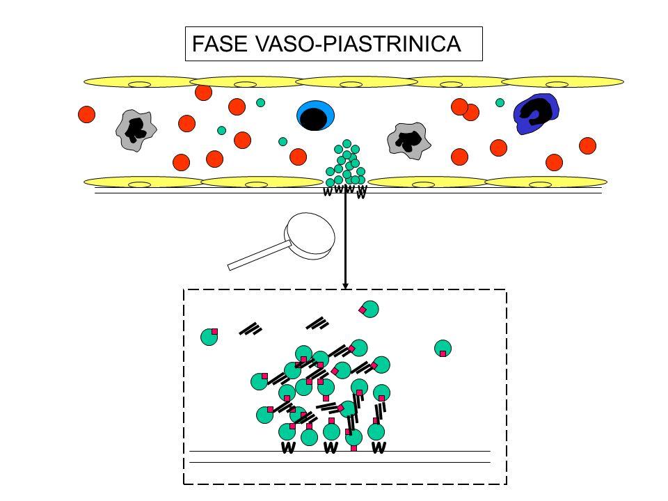 Difetti dellEmostasi Primaria Piastrinopenie Piastrinopatie Difetti di proteine adesive (afibrinogenemia, malattia di von Willebrand) Anemia (es: uremia)