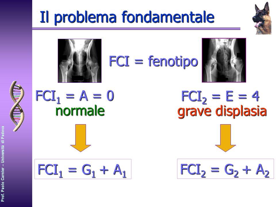 Prof. Paolo Carnier – Università di Padova Il problema fondamentale FCI 1 = A = 0 normale FCI 2 = E = 4 grave displasia FCI = fenotipo FCI 1 = G 1 + A