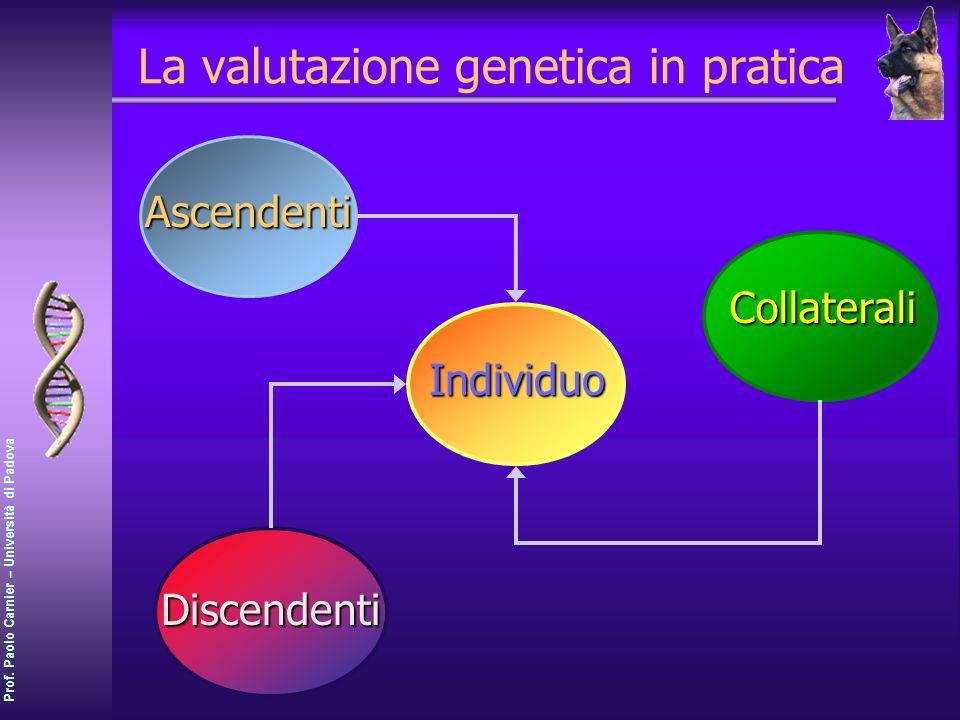 Prof. Paolo Carnier – Università di Padova La valutazione genetica in pratica Individuo Ascendenti Collaterali Discendenti