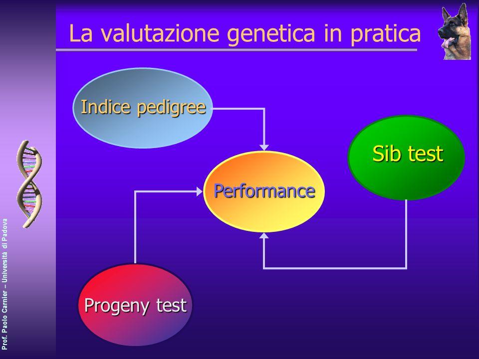 Prof. Paolo Carnier – Università di Padova La valutazione genetica in pratica Performance Indice pedigree Sib test Progeny test