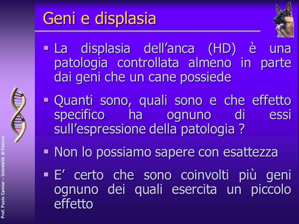 Prof. Paolo Carnier – Università di Padova Geni e displasia La displasia dellanca (HD) è una patologia controllata almeno in parte dai geni che un can