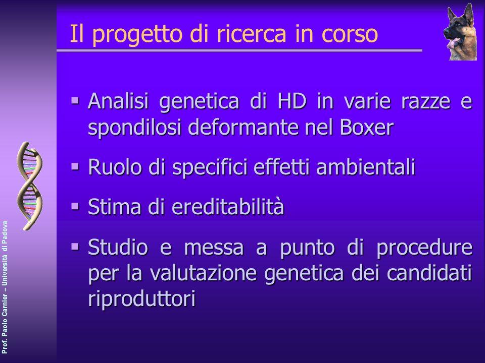 Prof. Paolo Carnier – Università di Padova Il progetto di ricerca in corso Analisi genetica di HD in varie razze e spondilosi deformante nel Boxer Ana