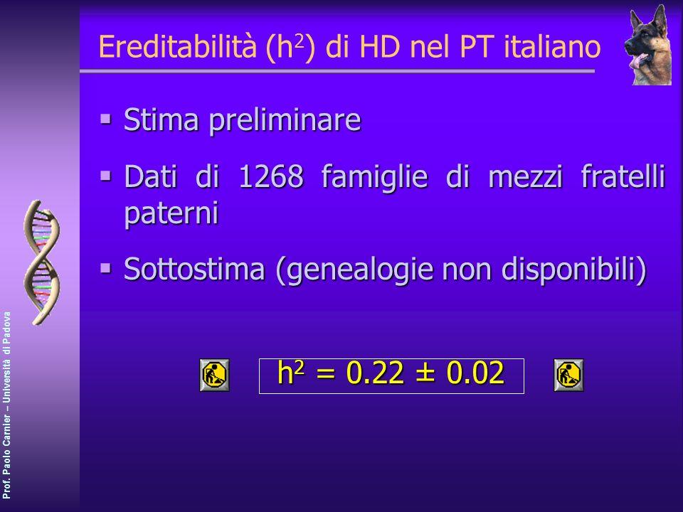 Prof. Paolo Carnier – Università di Padova Ereditabilità (h 2 ) di HD nel PT italiano Stima preliminare Stima preliminare Dati di 1268 famiglie di mez