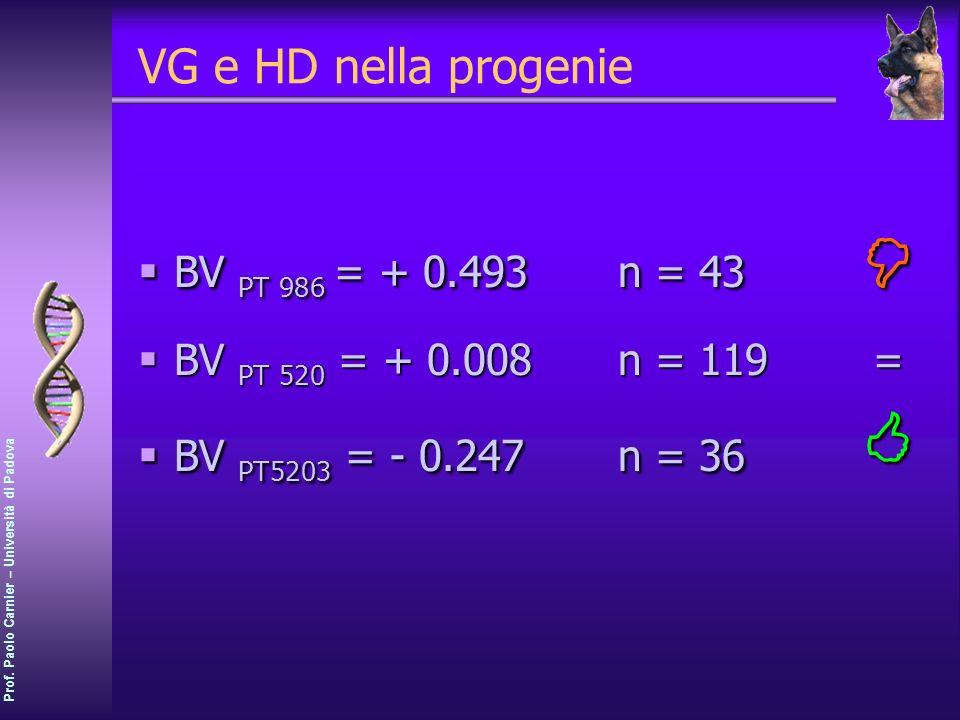 Prof. Paolo Carnier – Università di Padova VG e HD nella progenie BV PT 986 = + 0.493n = 43 BV PT 986 = + 0.493n = 43 BV PT 520 = + 0.008n = 119= BV P
