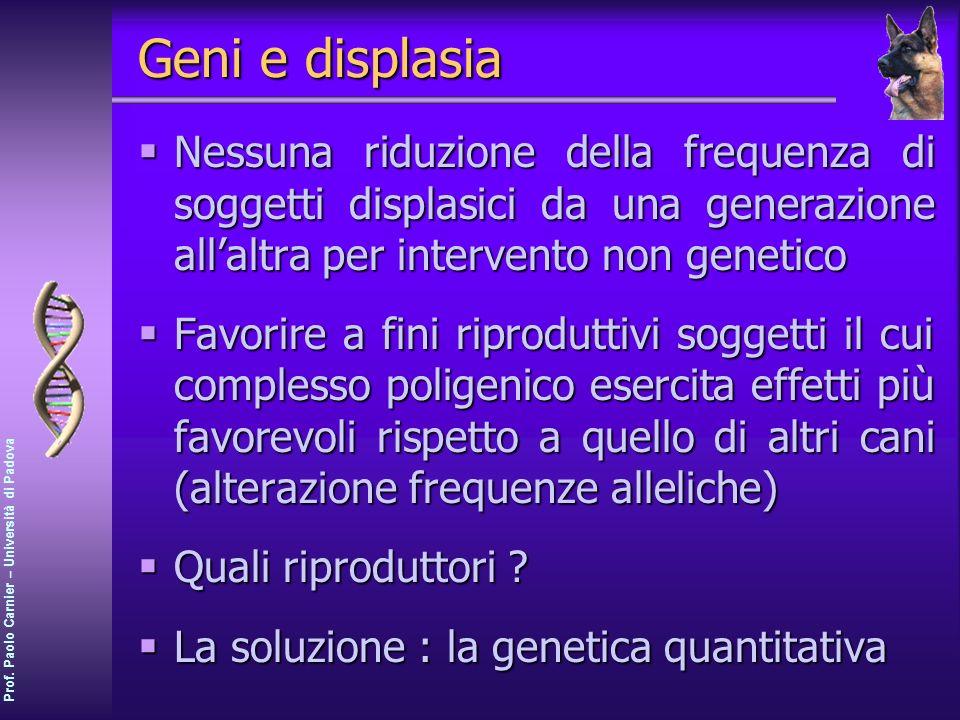 Prof. Paolo Carnier – Università di Padova Geni e displasia Nessuna riduzione della frequenza di soggetti displasici da una generazione allaltra per i