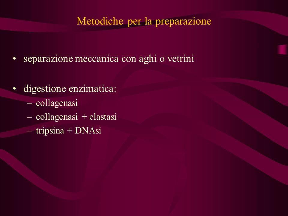 Metodiche per la preparazione separazione meccanica con aghi o vetrini digestione enzimatica: –collagenasi –collagenasi + elastasi –tripsina + DNAsi